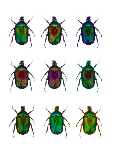 Nine beetles against a white background