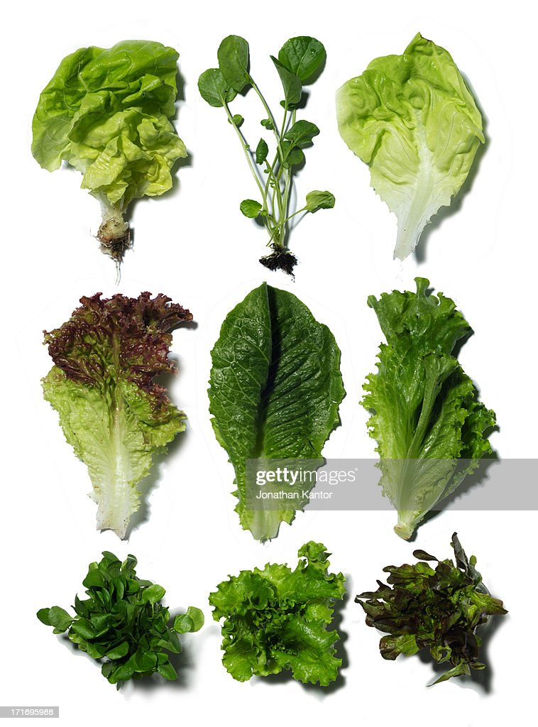 Nine Different Ways You Can Put Your Goals In Writing: Nine Different Types Of Lettuce Stock Photo