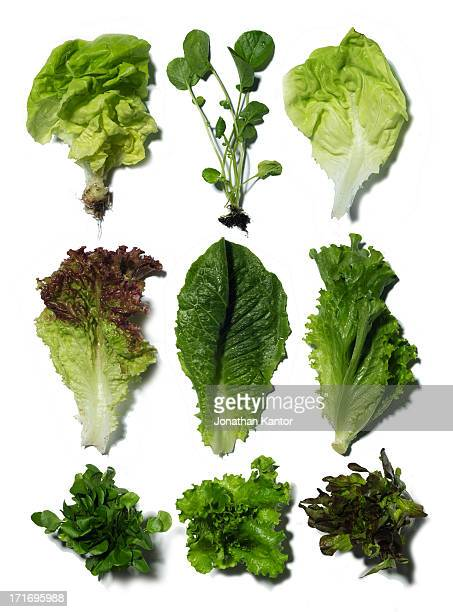 nine different types of lettuce - lettuce stock pictures, royalty-free photos & images