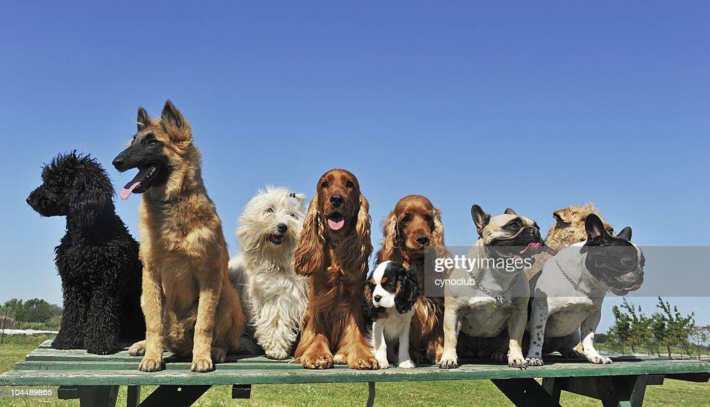 nine dogs : Stock Photo