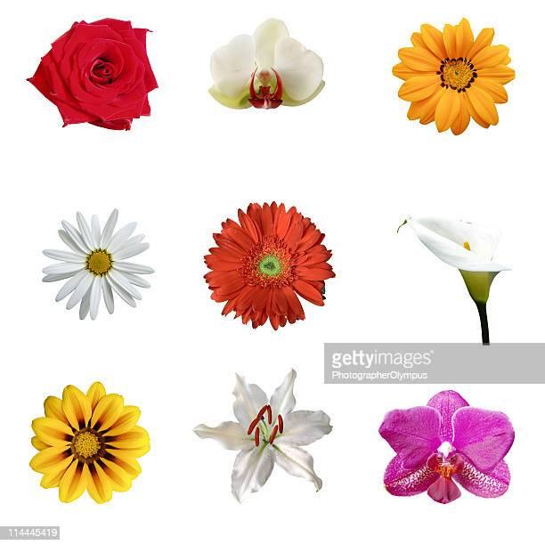 Nine tropical flowers XXXL