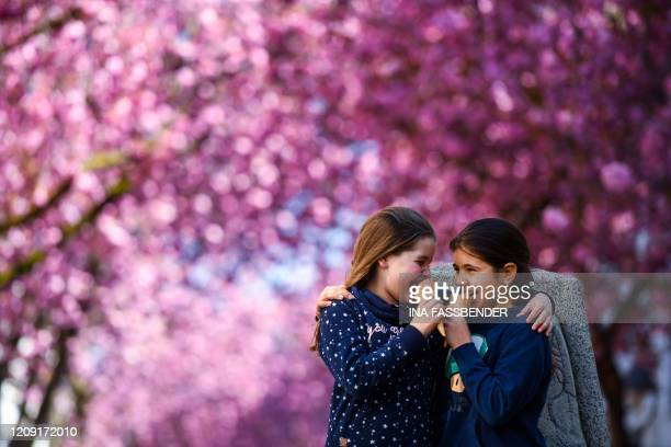 TOPSHOT Nine yearold Lilly and Esther eat their icecreams under the blooming cherry trees at the Heerstrasse street in Bonn western Germany on April...
