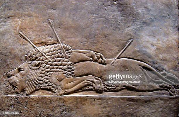Nineveh ancient city of Assyria near modernday Mosul in the Ninawa Governorate of Iraq Relief from the palace showing a lion hunted to death 2nd...