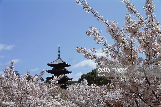 Ninnaji Temple, Kyoto Prefecture, Japan