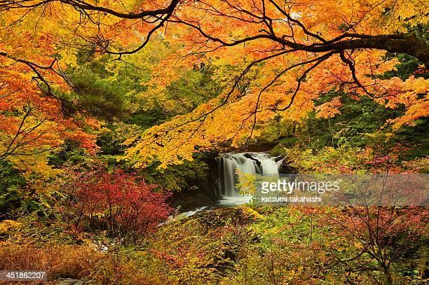 Nishiki fall
