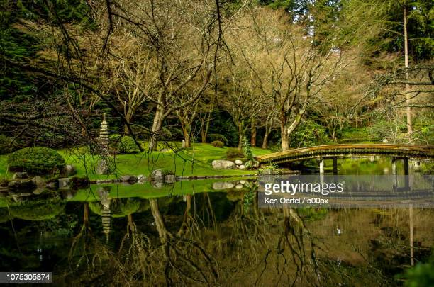 nitobe garden at ubc - ubc stock pictures, royalty-free photos & images