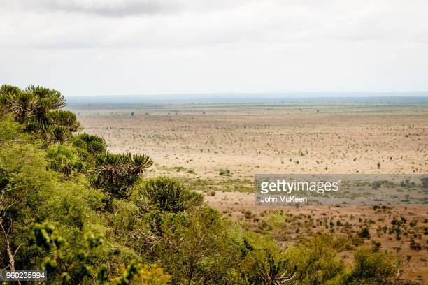 nkumbe view landscape - wildlife reserve stock pictures, royalty-free photos & images