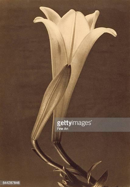 No 1 Tina Modotti American born Italy 1896 1942 1925 Platinum print Image 241 x 17 cm 86XM7222