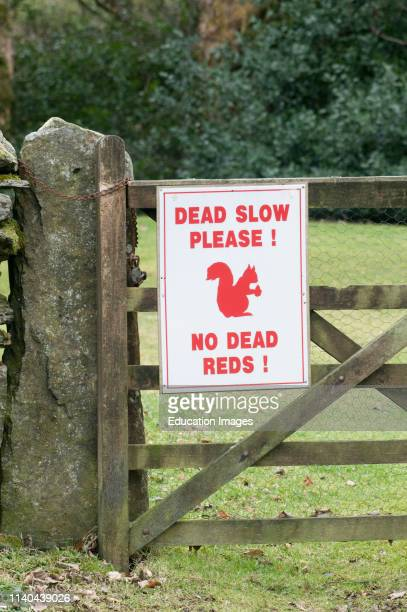 No Dead Reds sign, warning to slow down for Squirrels, Derwent Water, Lake District, Cumbria, UK.