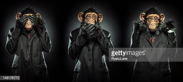 no evil - primate stock pictures, royalty-free photos & images