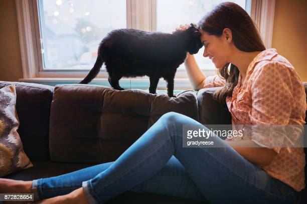no greater gift than the love of your cat - stroke stock pictures, royalty-free photos & images