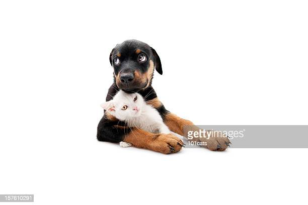 no one can touch him - dog and cat stock photos and pictures
