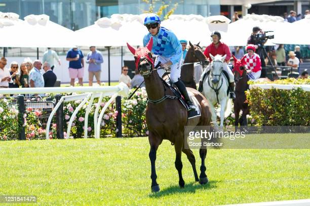 No Restriction ridden by Declan Bates heads to the barrier before the 2021 Lexus Melbourne Cup Tour at Flemington Racecourse on March 06, 2021 in...