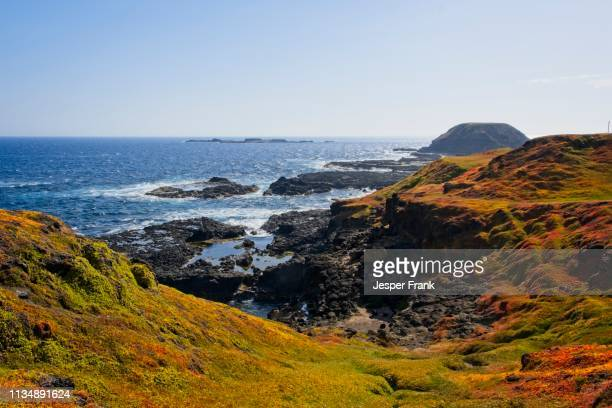 nobbies - phillip island stock pictures, royalty-free photos & images
