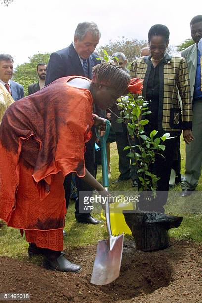 Nobel Peace Prize Laureate and Kenya's Assistant minister for Environment Wangari Maathai plants a tree 11 October 2004 at the UNEP headquarters in...