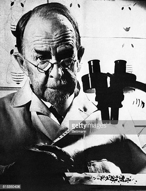 Nobel Prize winning geneticist Thomas Hunt Morgan with a microscope at a laboratory.