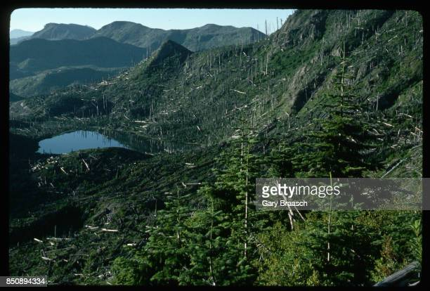 Noble firs stand on a ridge above Meta Lake amid a forest destroyed by the eruption of Mount St Helens nine years earlier Washington