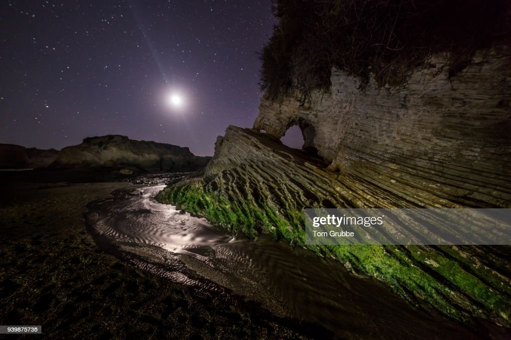 Nocturnal : Stock Photo