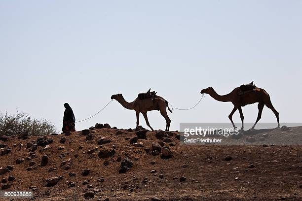 nomad with camels  in the danakil desert ethiopia - camel train stock pictures, royalty-free photos & images