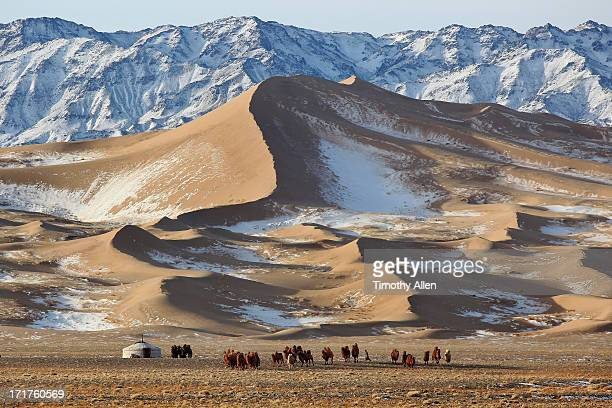 Nomadic camel herder by snow covered sand dunes