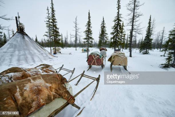 nomadic camp of the nenets - cliqueimages stock pictures, royalty-free photos & images