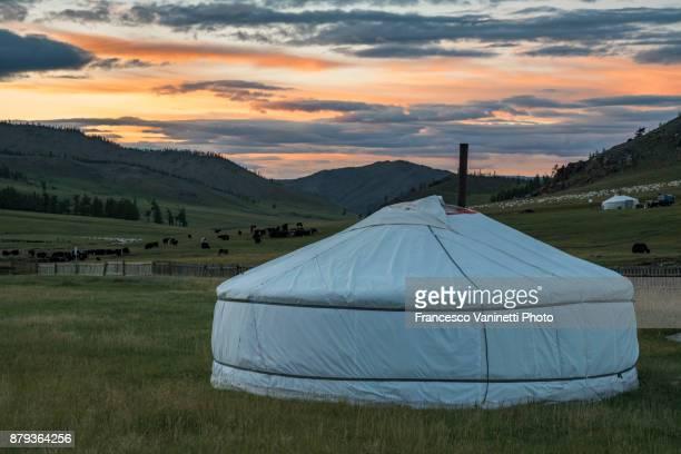 Nomadic ger and livestock in the background at sunset. Burentogtokh district, Hovsgol province, Mongolia.