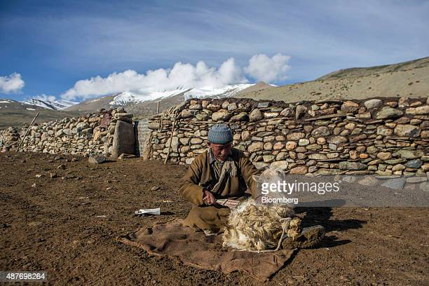 A nomadic goatherd combs pashmina wool from a goat in the valley of Kharnak Jammu and Kashmir India on Sunday Aug 9 2015 Pashmina goats are no...