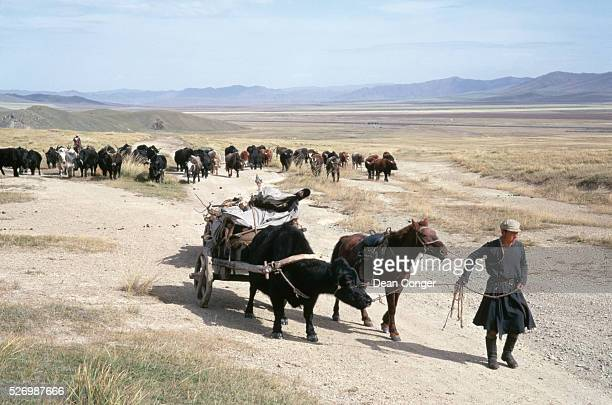 A nomadic herder leads his Mongolian horse and an ox pulling a cart along a dirt road on a grassy plain in Mongolia Another herder on horseback...