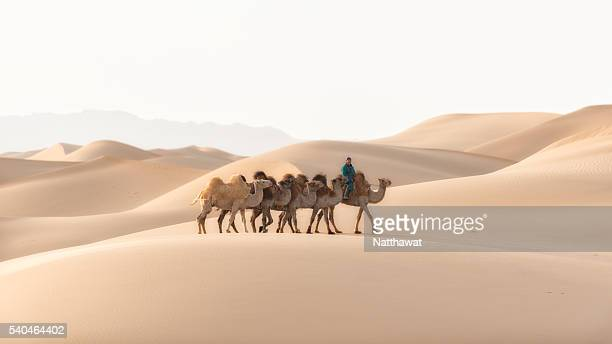 nomadic herder rides camel on gobi sand dune - camel train stock pictures, royalty-free photos & images