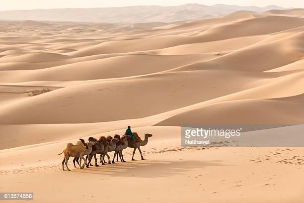 Nomadic herder rides camel on Gobi sand dune