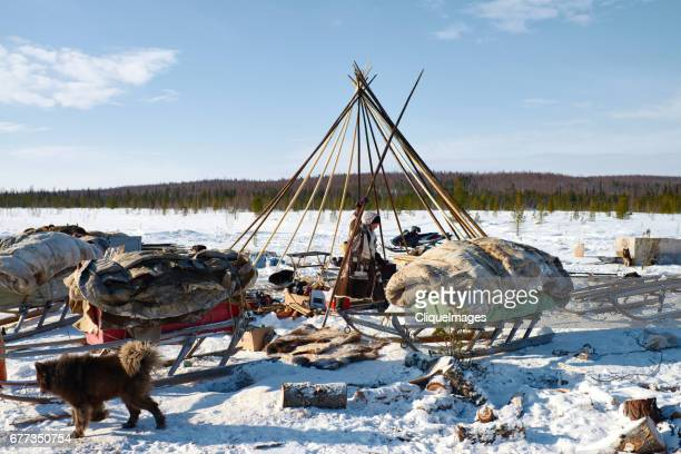 nomadic nenets making camp - cliqueimages stock pictures, royalty-free photos & images
