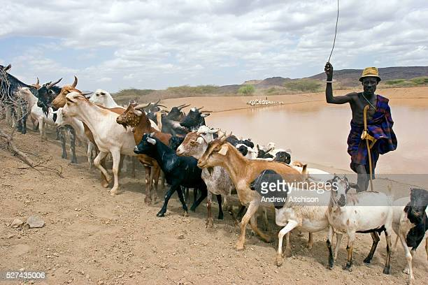 A nomadic pastoralist herds his goats out of the Kaeris water reservoir which was built by the community with help from Oxfam The reservoir is about...