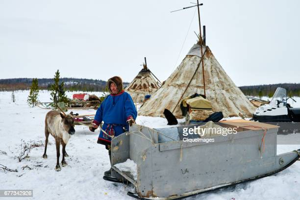 nomadic reindeer herder in camp - cliqueimages stock pictures, royalty-free photos & images
