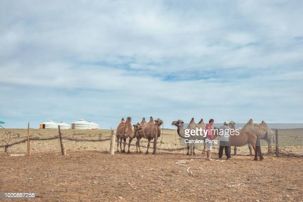 Nomads and their livestock which mostly consists of Bactrian camels and horses.