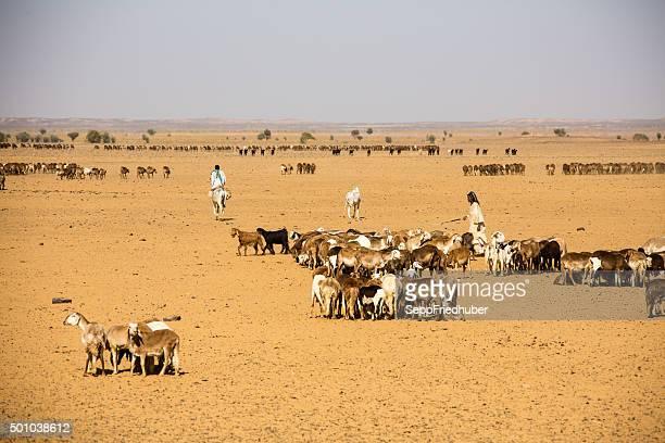 Nomads en una gran fuente de Sudán