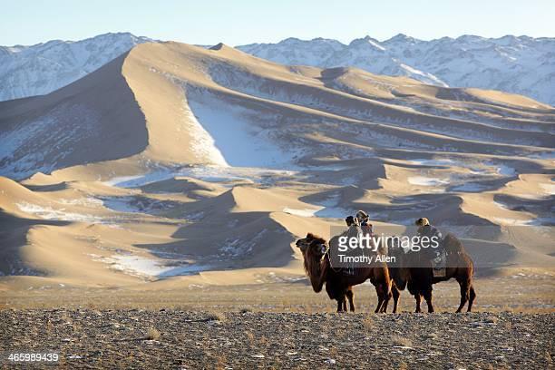 Nomads & camels by snow covered dunes, Gobi desert
