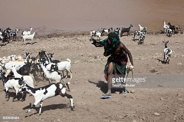 Nomads con cabaña de los animales en el interior de Etiopía Danakil abrevadero