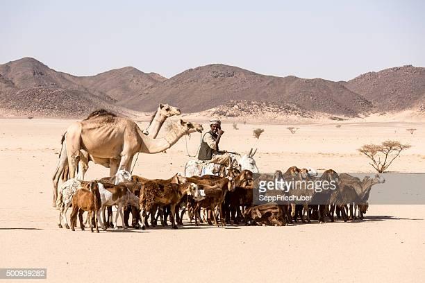 Nomads con cabaña de los animales en el desierto de Sudán