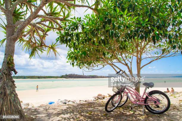 noosa chillin' - sunshine coast australia stock pictures, royalty-free photos & images