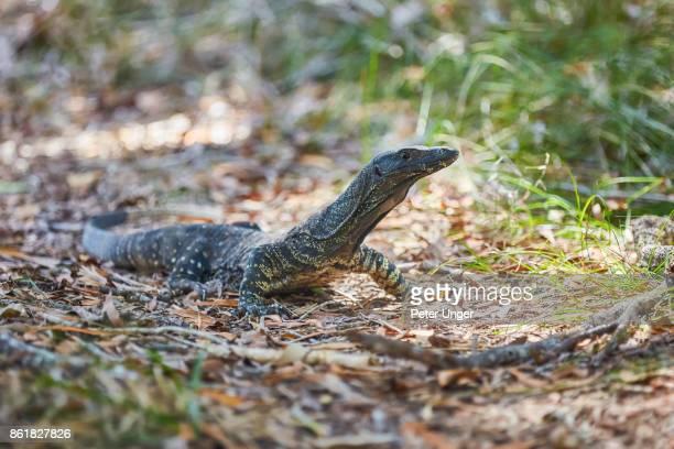 Noosa Everglades in the Noosa Hinterlands,Queensland,Australia