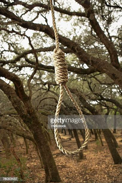 noose in woods - lynching stock photos and pictures