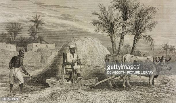 Noreg wheat threshing machine Egypt engraving by Lemaitre from Egypte depuis la conquete des Arabes jusque a la domination francaise by Marcel...