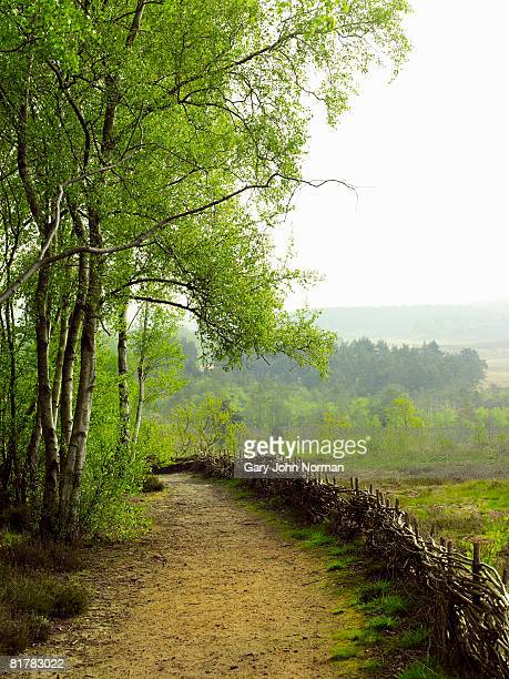 norfolk england public footpath lined by coppice fence - king's lynn stock pictures, royalty-free photos & images
