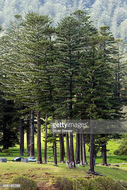 Norfolk Island Reserve