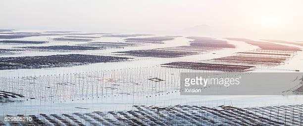 nori cultured in the sea in Xiapu city, Fujian Province