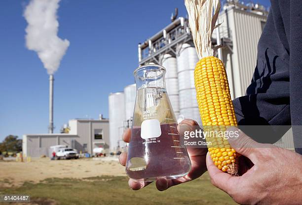 Norm Crain displays an ear of corn and a beaker of 200 proof ethanol produced at the Adkins Energy ethanol production facility October 4 2004 near...