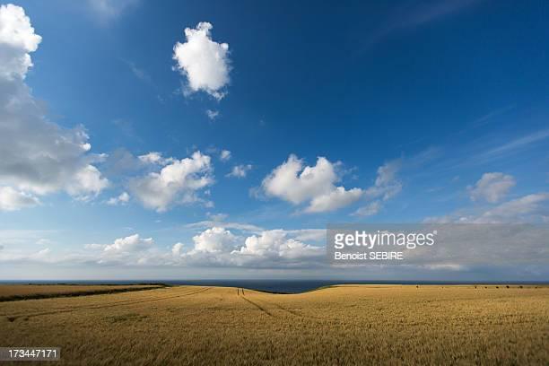 Norman skyscape
