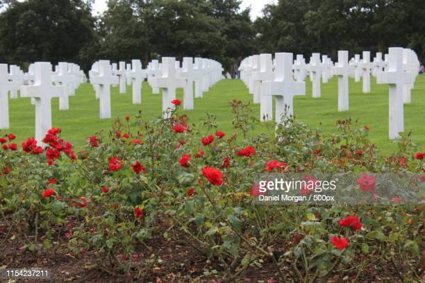 normandy american cemetery - d day stock pictures, royalty-free photos & images