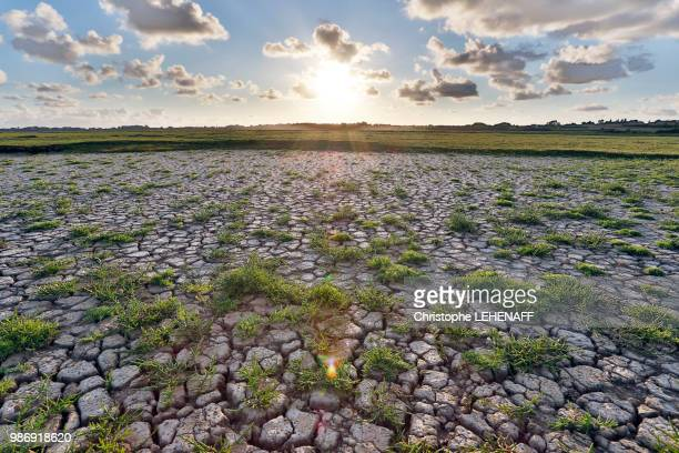 Normandy. Channel. Regneville on Wed Sunset on the marshes drained by the heat wave. Salicornes.