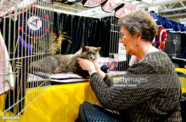 Norskwood Linnae a Norwegian Forest Cat participates in the GCCF Supreme Cat Show at National Exhibition Centre on October 28 2017 in Birmingham...